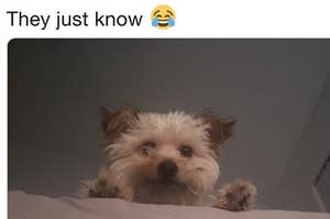 c8f3cb756e4d3 Every Dog s Reaction To Hearing The Sound Of A Chip Bag Opening Is The Same  And