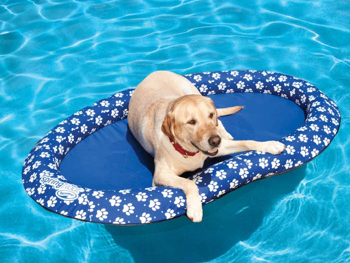 But it won't hurt to double up with a doggy life jacket!Price: $48.69
