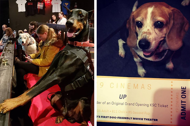 There's A Dog-Friendly Movie Theater In ...