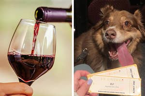 981167cc6d382 There s A Dog-Friendly Movie Theater In Texas That Serves Unlimited Wine