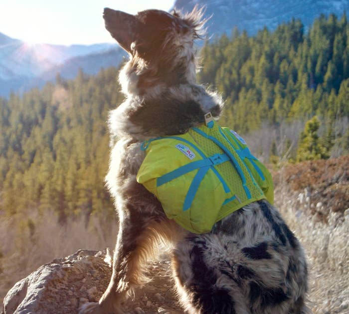 25 Things From Walmart That'll Help Your Dog Have A Better Summer