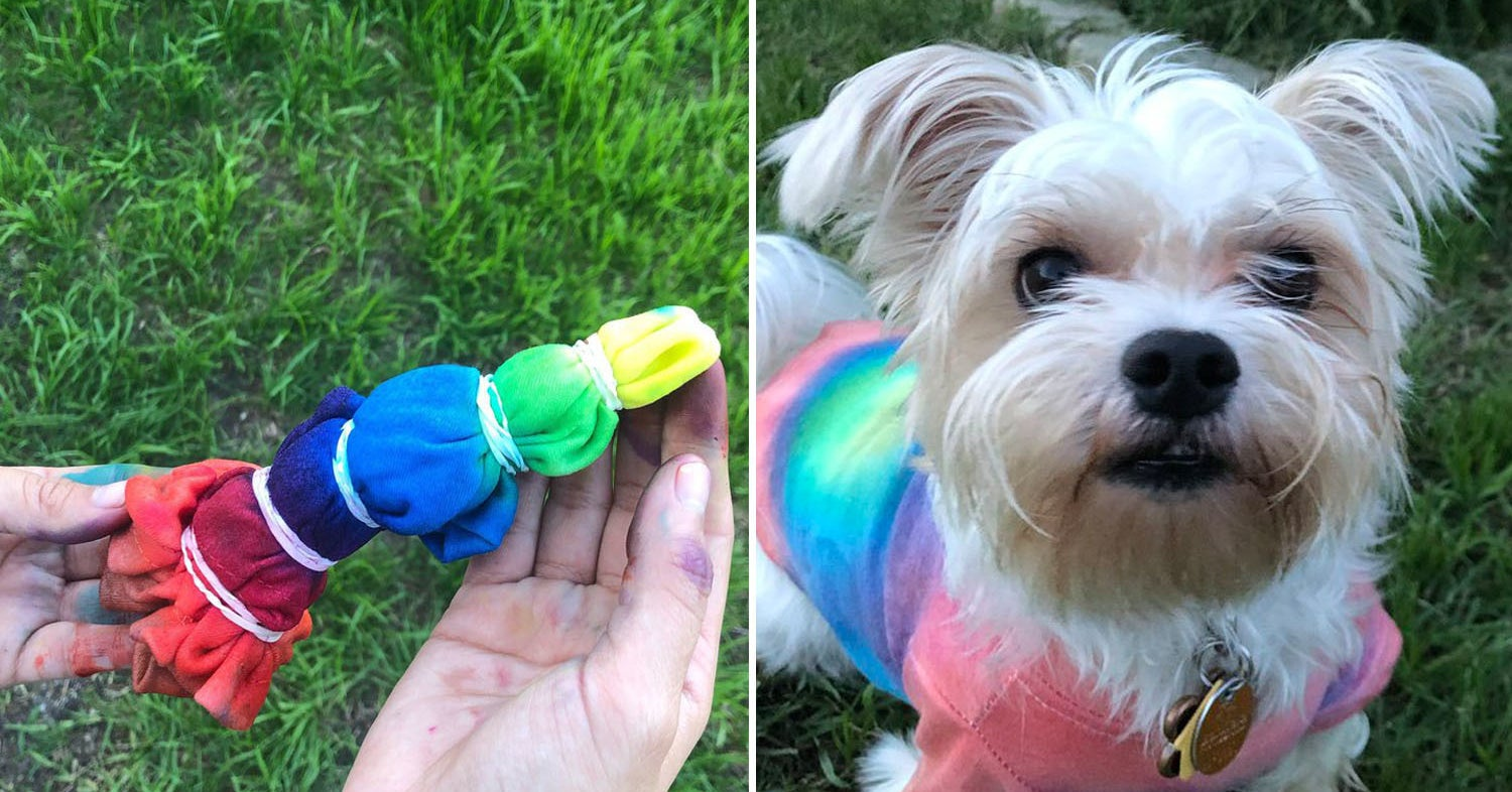 9338539bb3 Here Are The Best Dog Posts From This Week — May 24, 2019