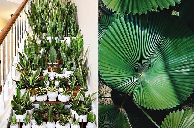 19 Photos Of Plants That Will Make You Feel Maximum Relaxed