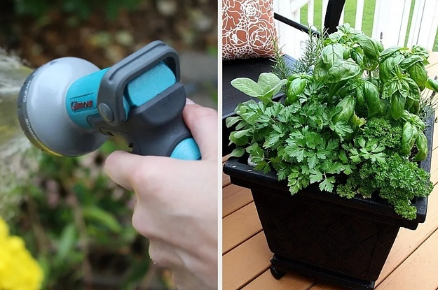31 Seriously Useful Gardening Basics Every Beginner Needs To Know