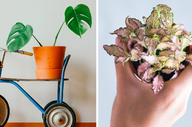 15 Stylish Houseplants That Actually Thrive In Low Light