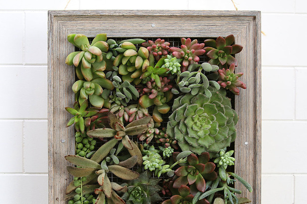 It S Honestly So Easy To Make This Hanging Succulent Garden
