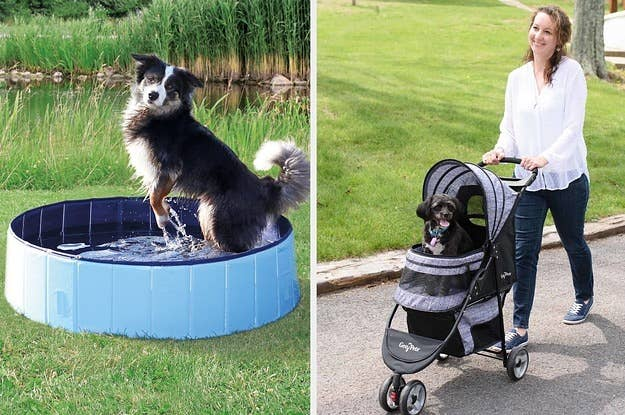 30 Things For Your Pets You'll Wish You'd Bought Years Ago