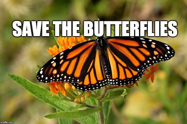 There's A Reason You Don't See Butterflies Anymore And Here's What You Can Do About It