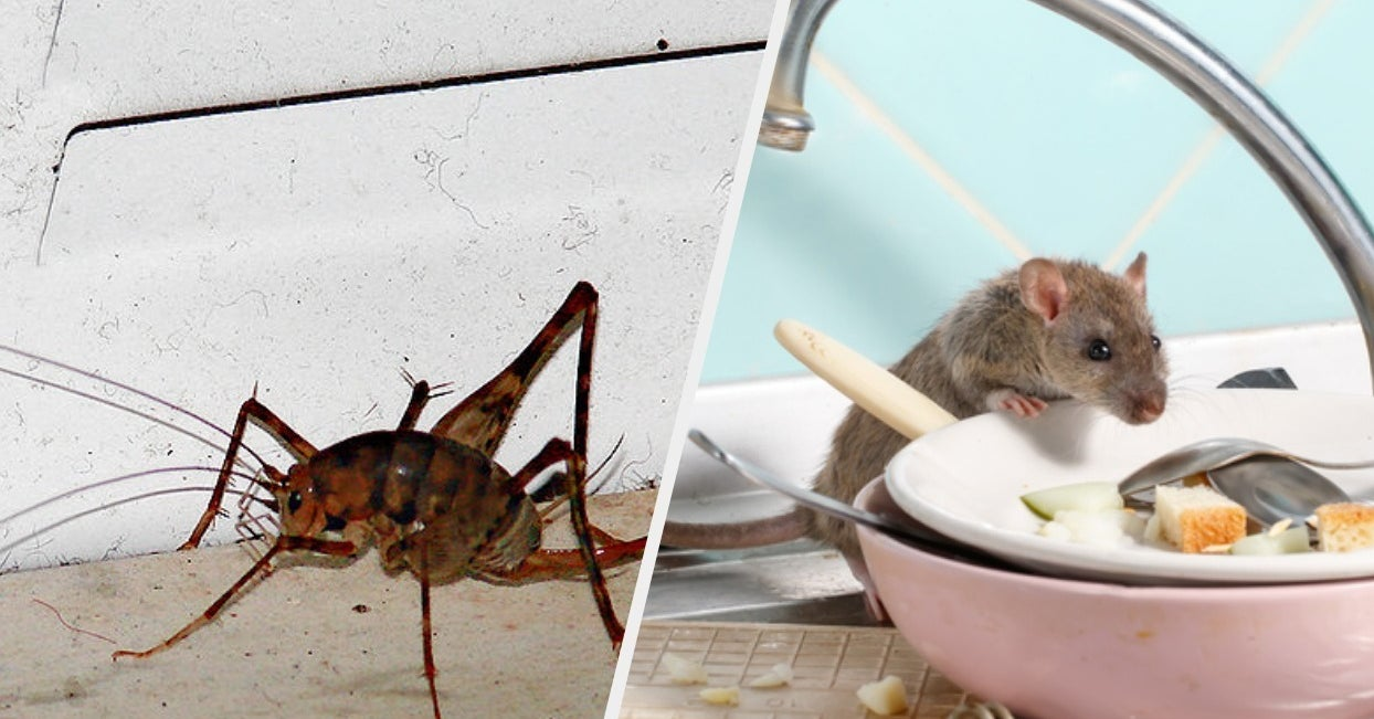 24 Horror Stories About Bugs and Vermin