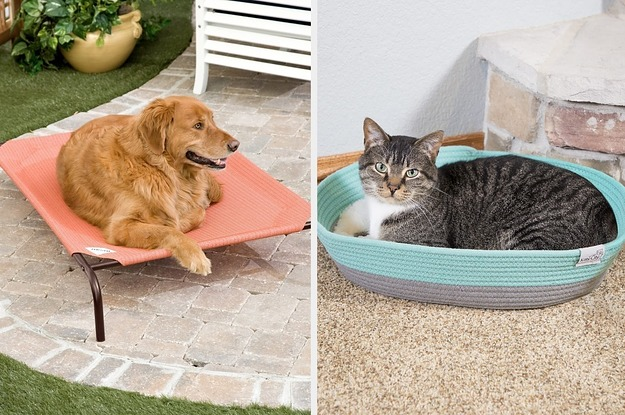 26 Surprisingly Inexpensive Pet Supplies From Walmart