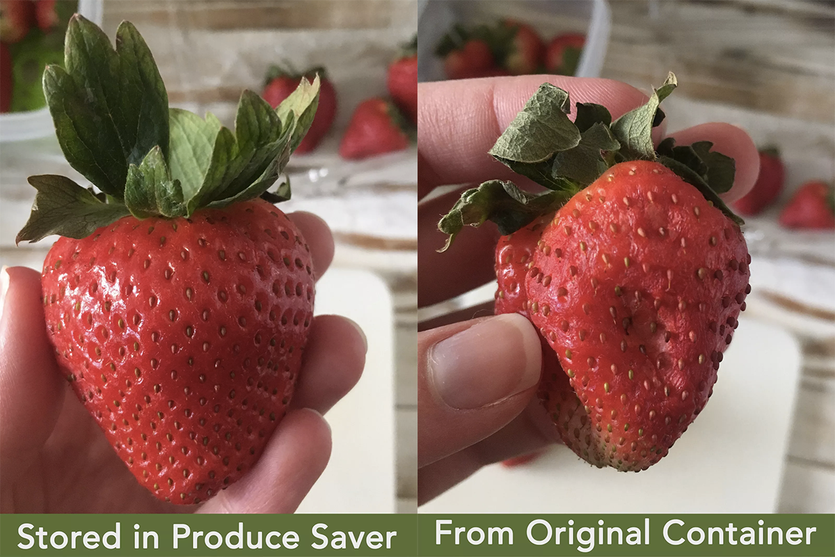 "left: big fresh strawberry that says ""stored in produce saver"" right: wrinkled strawberry that says from original container"