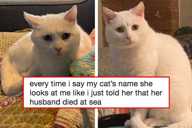 19 Cat And Dog Tweets That Prove The ...