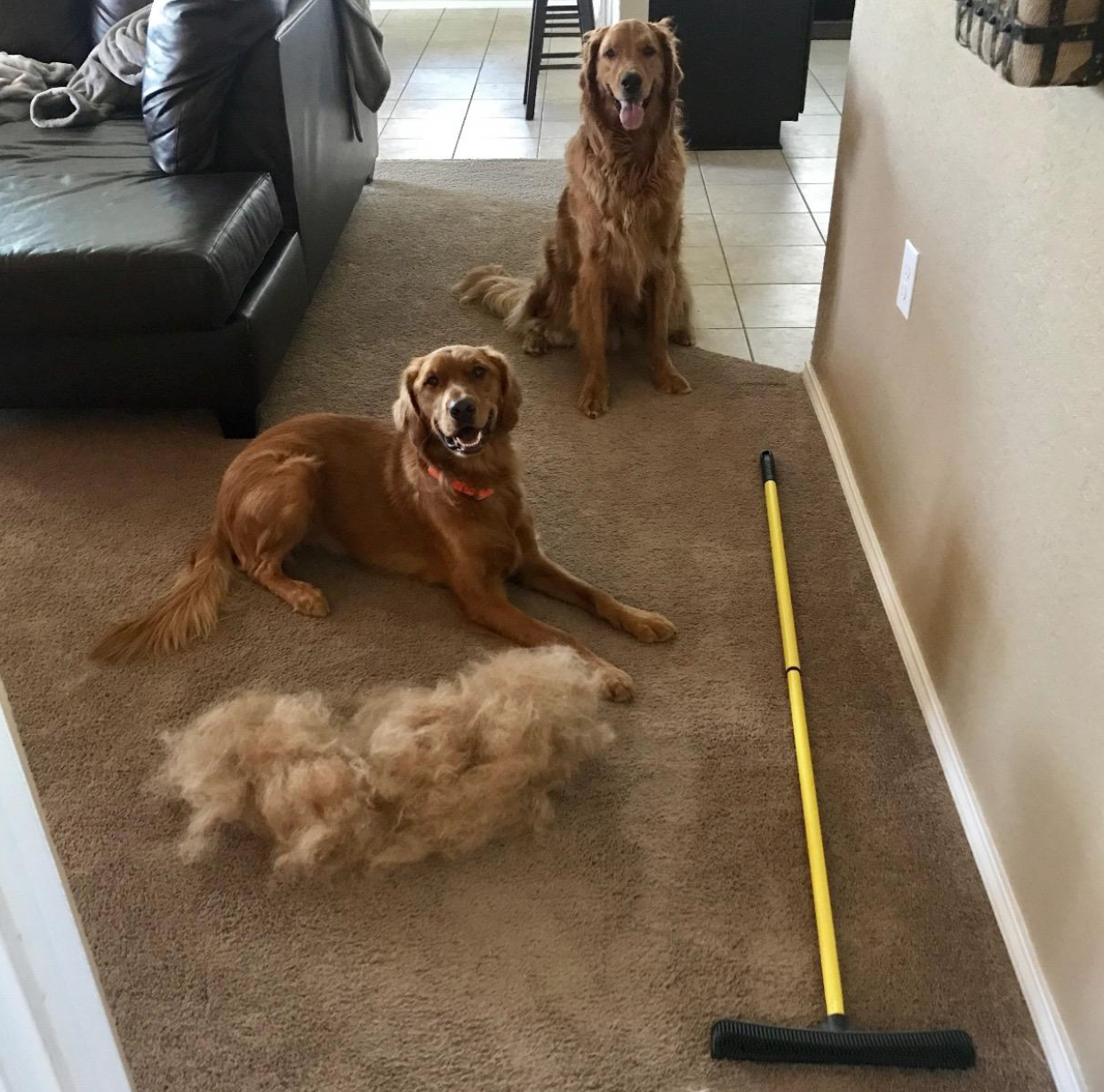 reviewer image of two dogs sitting on carpet next to a mound of fur swept up the the rubber broom