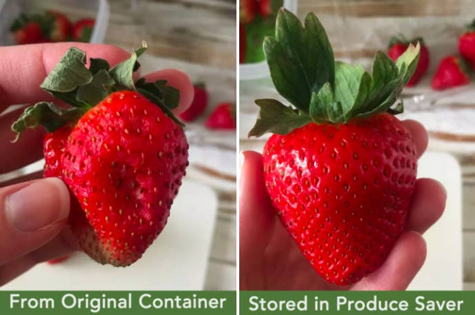 Review photo taken by BuzzFeed editor Natalie Brown showing side by side two strawberries stored in the original container and the produce-saving storage container. One is dried while the other looks fresh