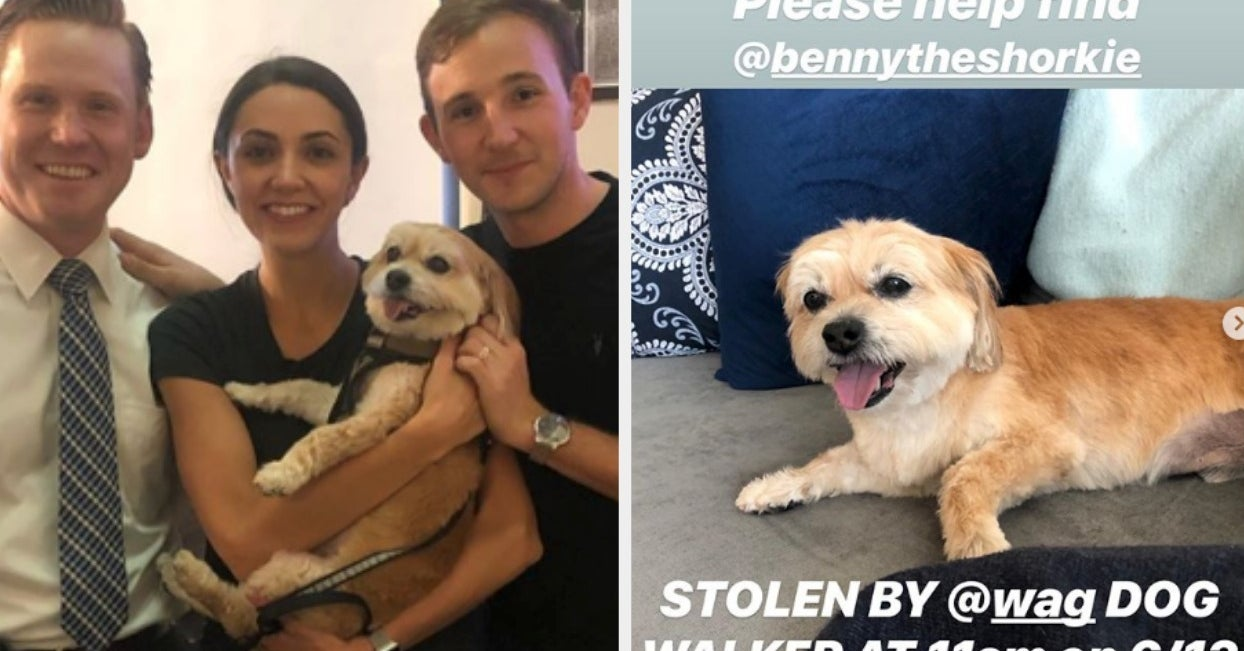 A Couple Whose Dog Was Stolen By A Wag! Walker Is Calling For A Boycott Of The App