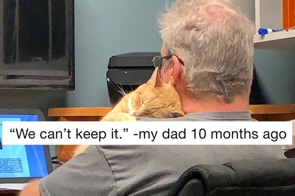 19 Dads Who Didn T Want A Cat And Came Around Real Fast