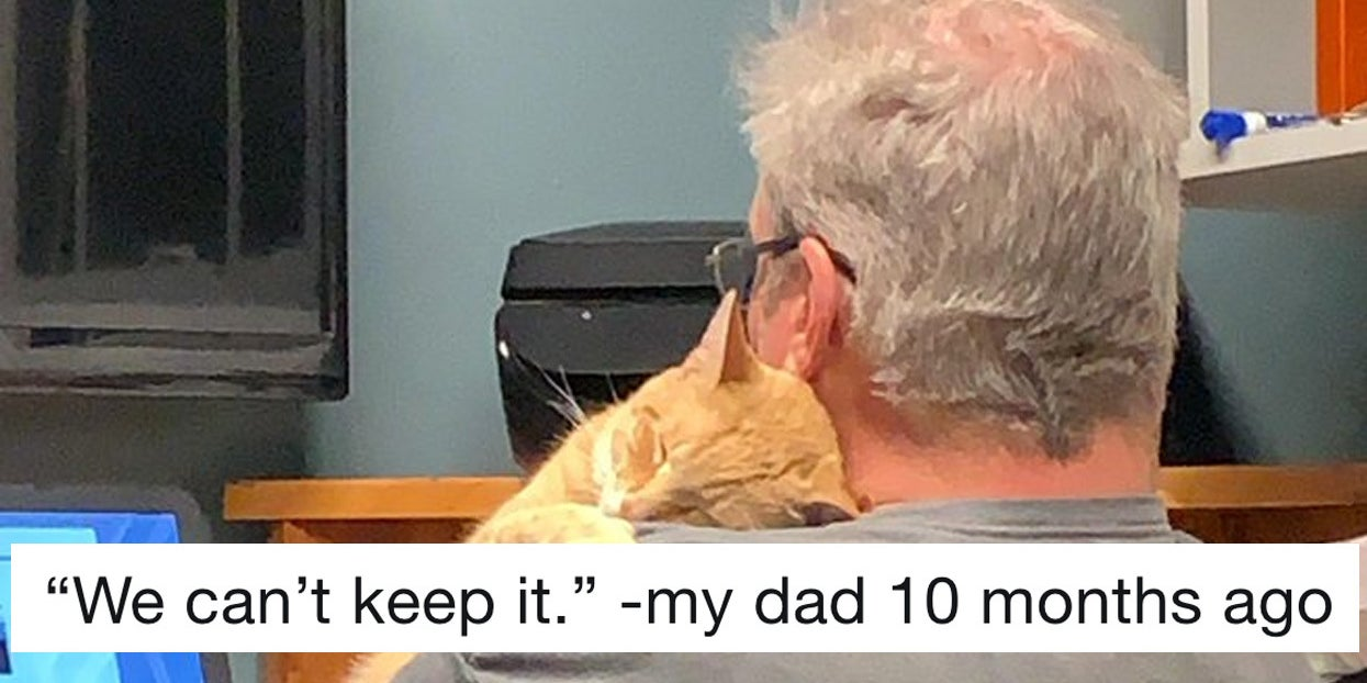 19 Dads Who Didn't Want A Cat And Came Around Real Fast