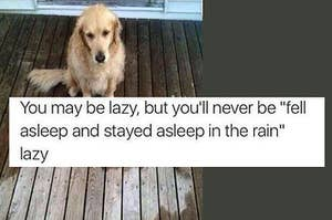 16 Cats And Dogs That May Seem Lazy, But Are Actually Geniuses