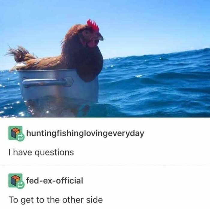 19 Tumblr Posts About Chickens You Didn't Know You Needed Until Right Now