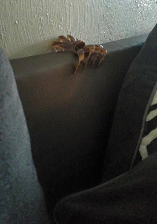 """17 Unintentionally Scary Images That Will Make You Say, """"OMG"""" Then """"Oh, I See"""""""