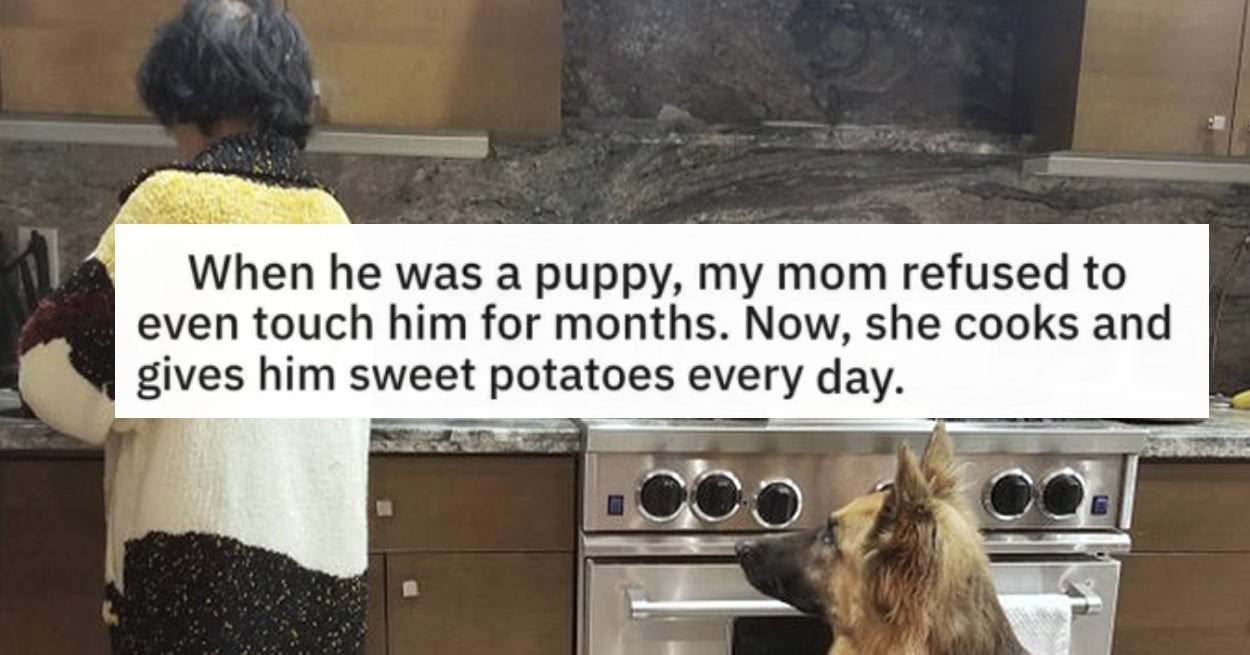 17 Moms Who Pretended To Not Want A Dog But Caved Real Fast