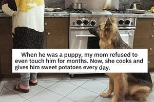 17 Moms Who Didn't Want A Dog And Came Around Real Fast