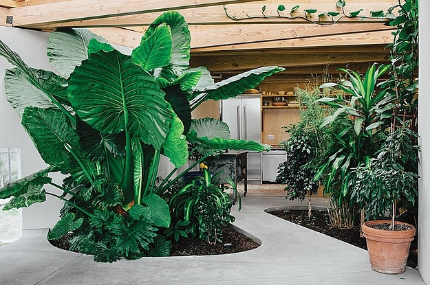 8 Lush Homes To Inspire Your Own Indoor Plant Party