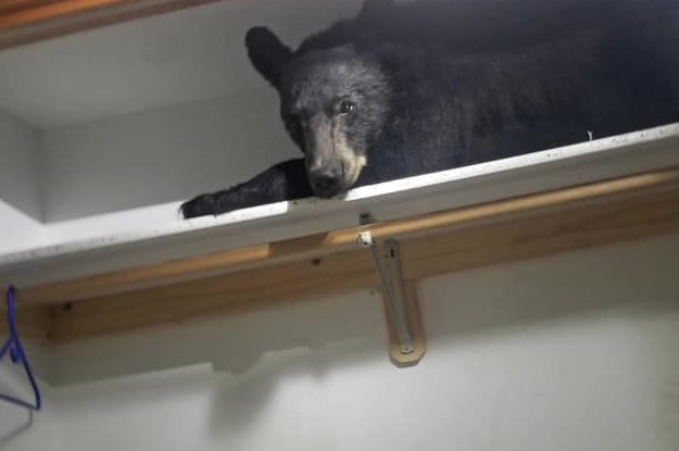 Someone Found A Literal Bear In Their Closet And The Picture Is Terrifying