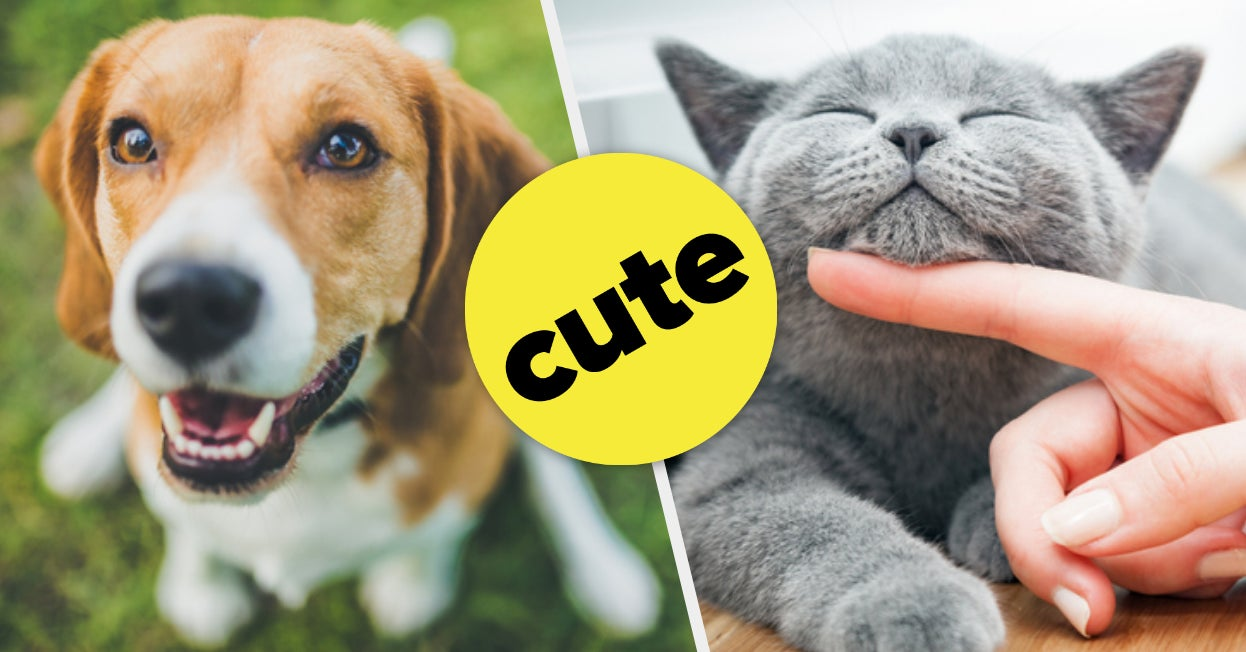 Should You Get A Dog Or Cat?