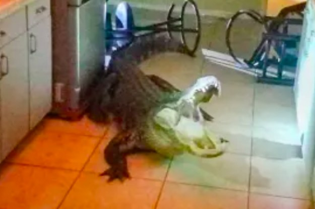 An Alligator Broke Into Someone's Kitchen In Florida And The Pictures Are Pretty Terrifying