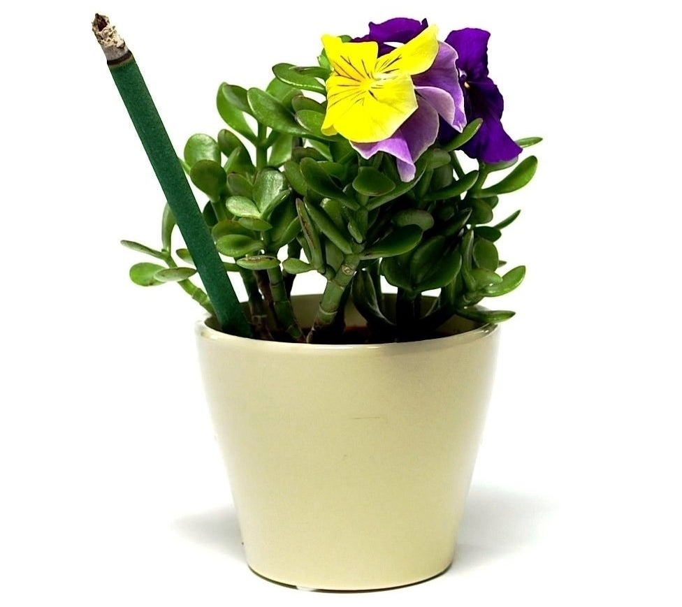 potted plant with flower with green stick stuck into the soil