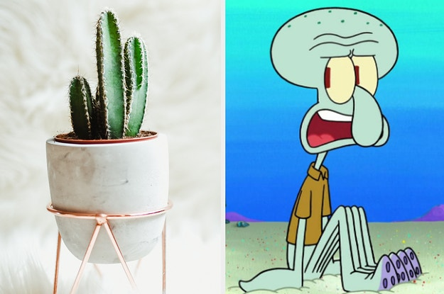 The Good Place Cactus Meme Blank