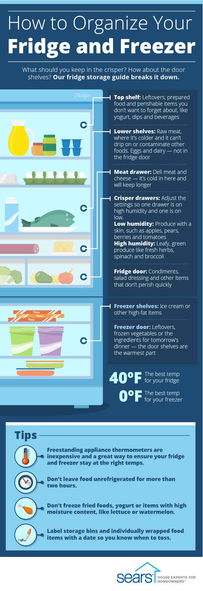 Diagram showing where different types of food should be stored in a fridge