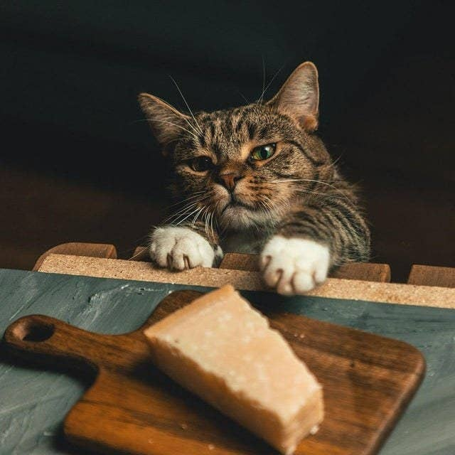 The Best Cat Posts From This Week — July 19, 2019