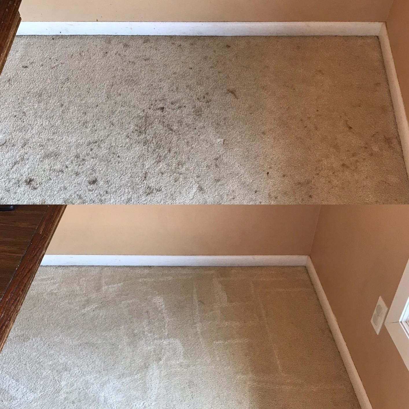 Before: a reviewer's stained corner of carpet and After: no more stains in sight