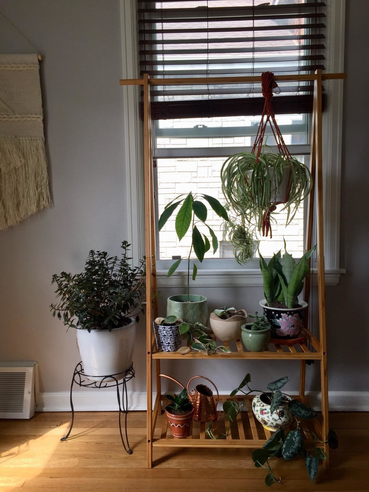 wooden rack with two shelves. there are plants on the shelves and a plants hanging from the top bar