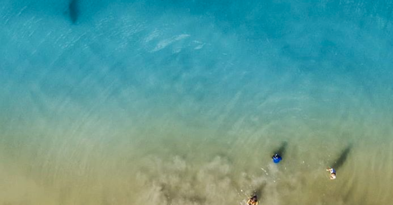 Florida Shark Photo Taken From A Drone