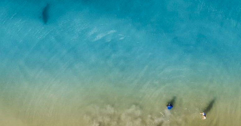 Look At This Shark Photo Taken From A Drone In Florida