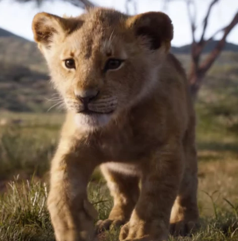 Heres What The Lion King Characters Look Like Then Vs Now