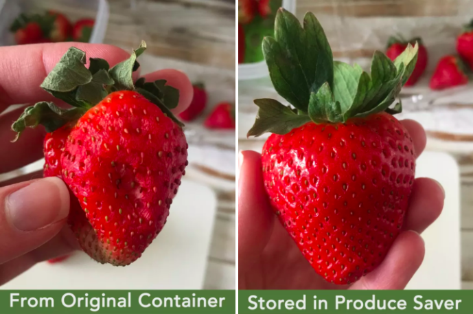 Review photos taken by BuzzFeed editor Natalie Brown comparing a strawberry stored in the original container and the produce saver. The first strawberry is wilted while the second strawberry is still fresh
