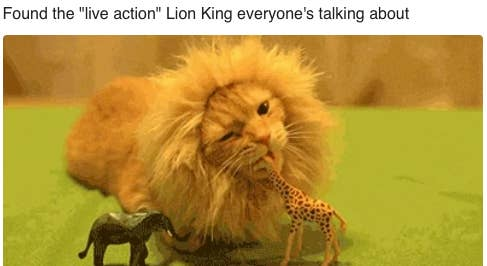 Literally Just 42 Great Memes About The New Lion King