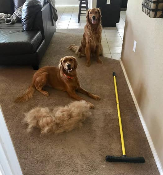 A reviewer showing a huge pile of dog hair that has been swept up