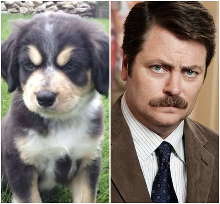 16 Regular Dogs That Look So Much Like Celebs It's Crazy