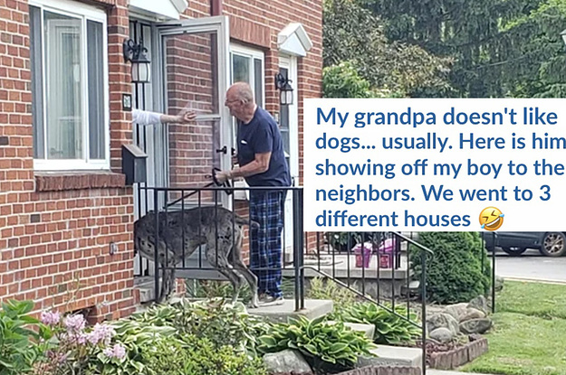 15 Grandparents Who Clearly Lied About Not Wanting Pets