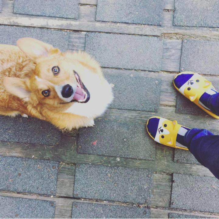 A reviewer wearing the corgi face slides next to an actual corgi, who seems to be amused