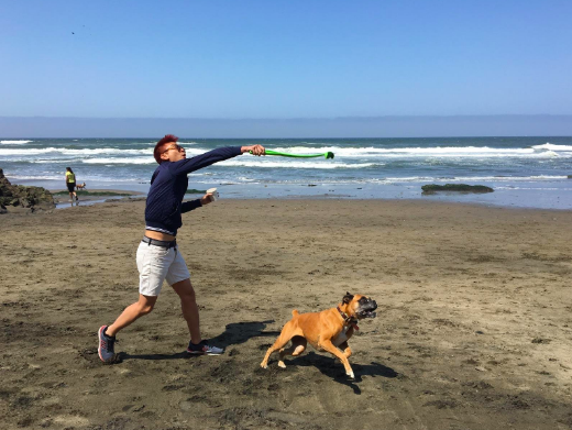 A reviewer using the ball launcher at the beach with their medium-sized dog