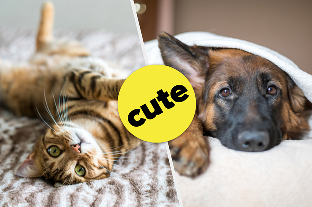This Slider Quiz Will Determine If You're More Of A Cat Or Dog Person