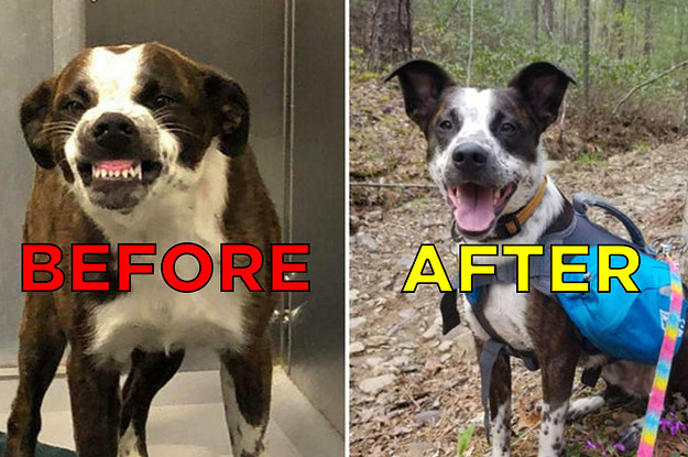 17 Before-And-After Adoption Pictures That Prove Just How Amazing Shelter Dogs Are
