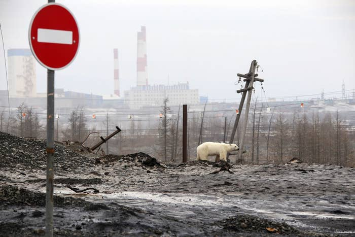 Opinion: Rivers Of Blood, Black Snow — What Rich Men Did To My Russian Hometown