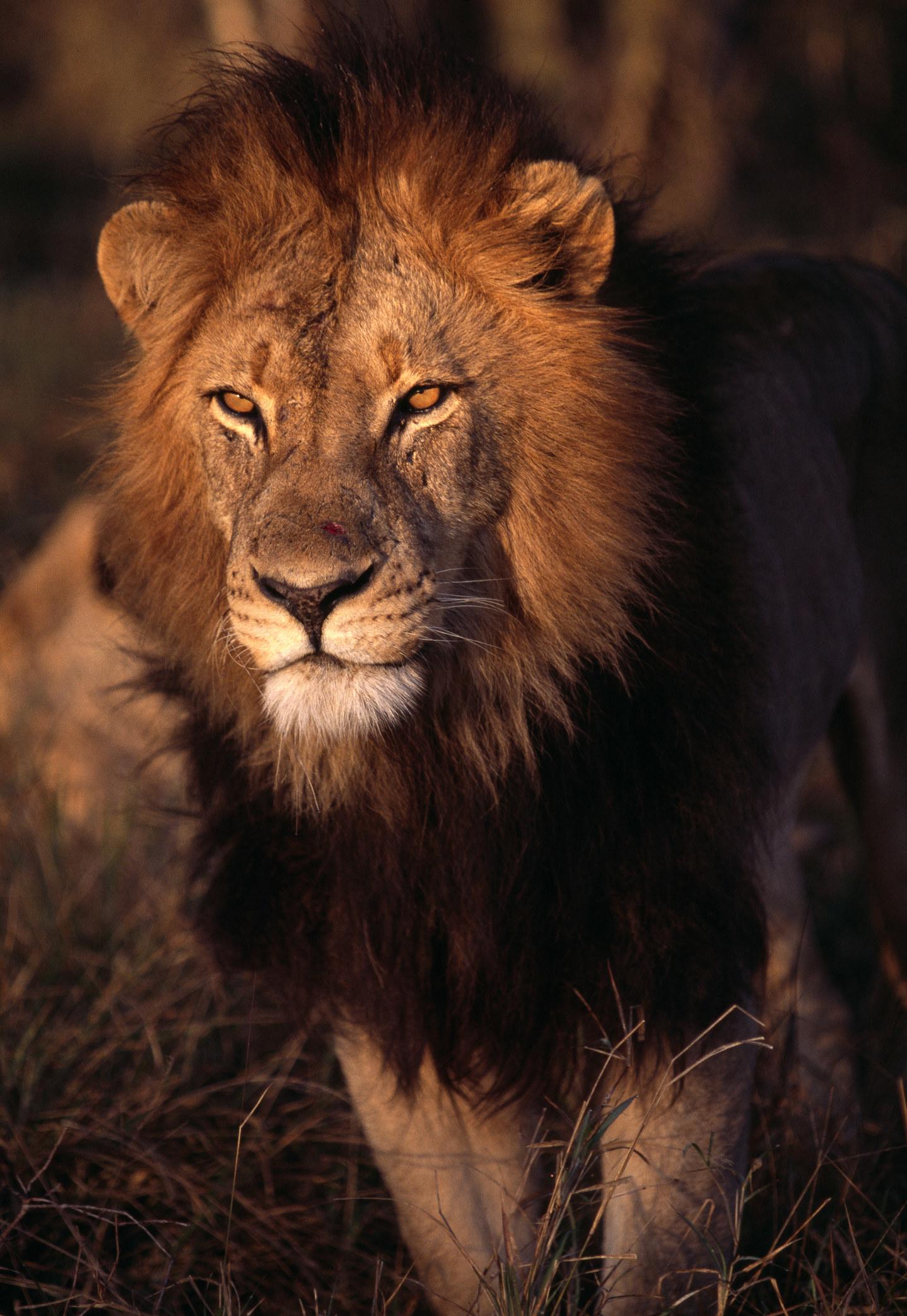 Www Lion Com - About Horse and Lion Photos